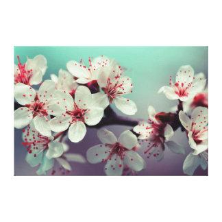 Cherry Blossom, Cherryblossom, Sakura Canvas Print
