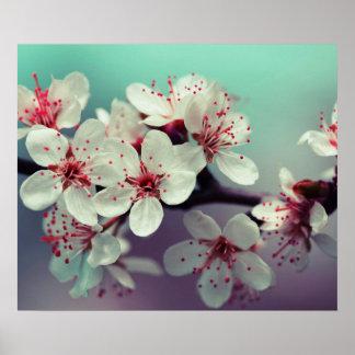 Cherry Blossom, Cherryblossom, Sakura Poster