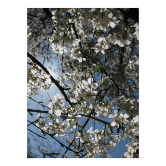 Cherry Blossom Equinox, print