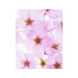 Cherry Blossom Flowers in Tokyo Japan Canvas Print
