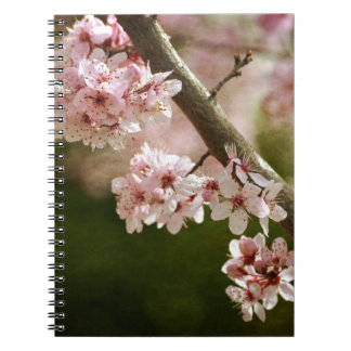 Cherry Blossom Flowers Spiral Note Book