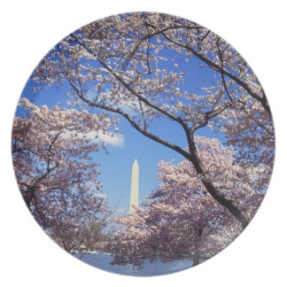 Cherry blossom in Washington DC Party Plate