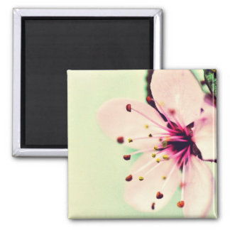 Cherry Blossom Fridge Magnet