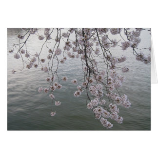 cherry blossom minus crowd card