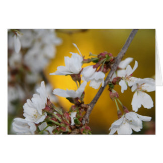 Cherry Blossom Notecard