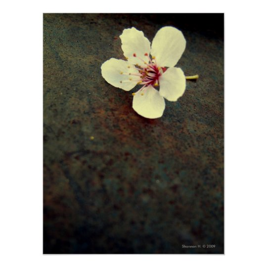 Cherry Blossom on Metal Poster