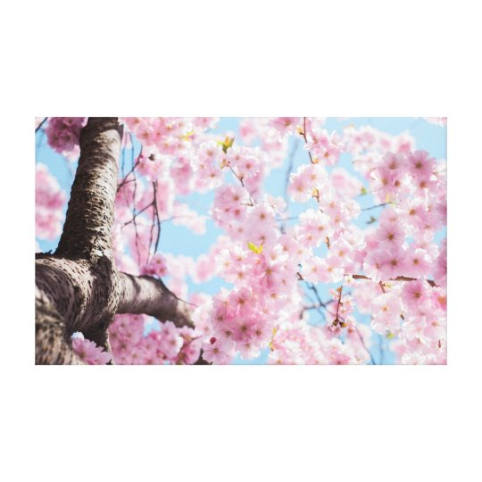 Cherry Blossom | Pink Canvas Print