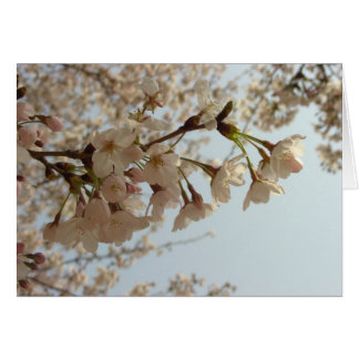Cherry blossom pink card