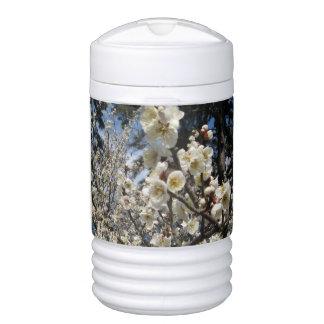 Cherry Blossom / Sakura / サクラ(桜) Drinks Cooler