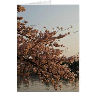 Cherry Blossom Tree Card