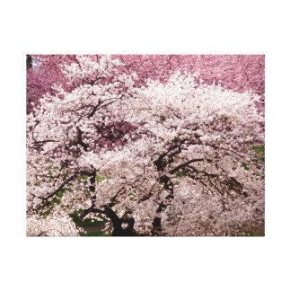 Cherry Blossom Wonderland Canvas Print