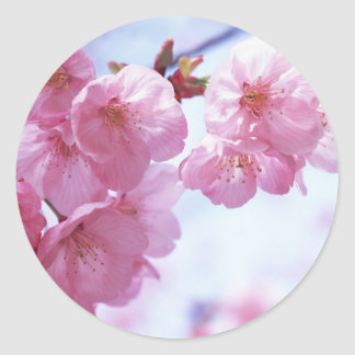 Cherry Blossoms #1 Stickers