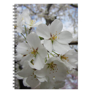 Cherry Blossoms 2 Notebook
