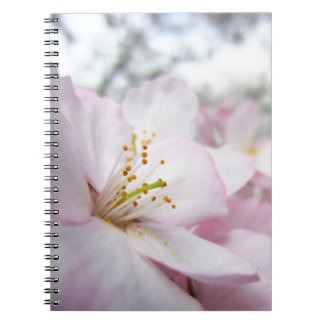 Cherry Blossoms 9 Notebook