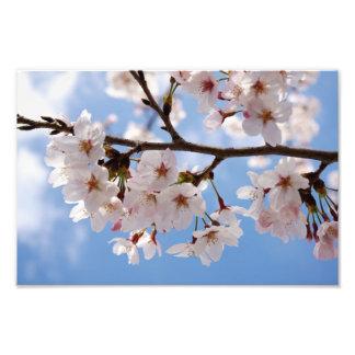 Cherry blossoms and light-blue sky photo