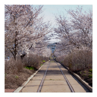 Cherry Blossoms and Tracks Philadelphia Poster