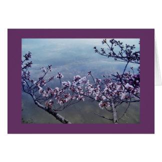 Cherry Blossoms at Tidal Basin, Washington DC-2 Card