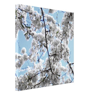 'Cherry Blossoms Blue & White' Wrpped Canvas Print