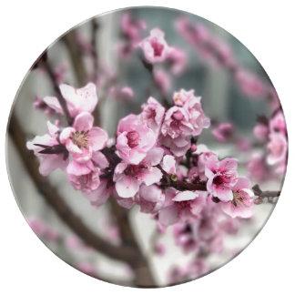 Cherry Blossoms Fine Porcelain Plate