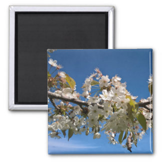 Cherry blossoms floral spring flower photo magnet