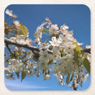 Cherry blossoms floral spring photo coaster