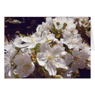 Cherry blossoms. Happy Easter. Card