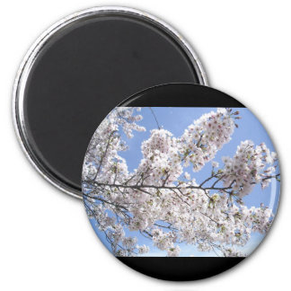 Cherry Blossoms in Japan 2 Inch Round Magnet