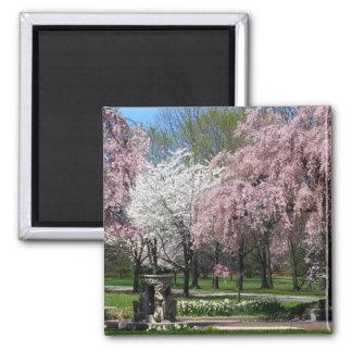 Cherry Blossoms in Philadelphia Magnet