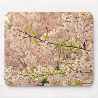 Cherry Blossoms in Spring Mouse Pad