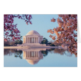 Cherry Blossoms in Washington DC Card