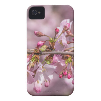 Cherry Blossoms iPhone 4 Covers