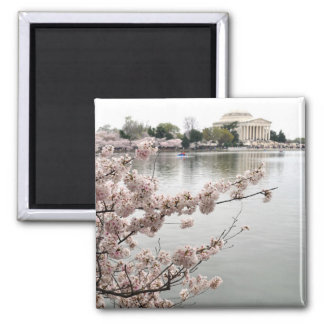 Cherry Blossoms - Jefferson Memorial Magnet