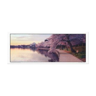 Cherry Blossoms- Jefferson Memorial- Panoramic Canvas Print