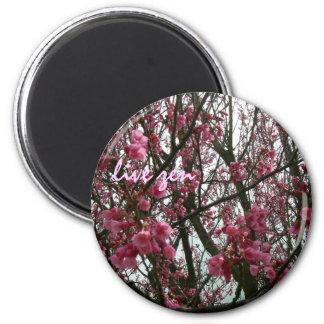 cherry blossoms live zen magnet