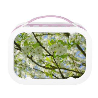 Cherry Blossoms Lunch Boxes