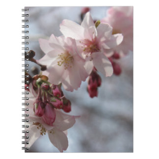 Cherry Blossoms Note Book