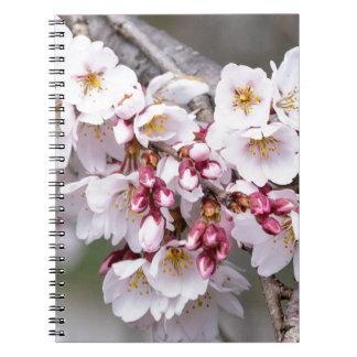 Cherry Blossoms Notebook