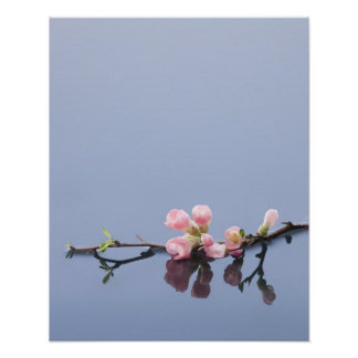 Cherry blossoms on water poster
