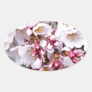 Cherry Blossoms Oval Sticker