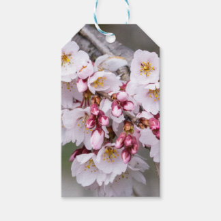 Cherry Blossoms Pack Of Gift Tags