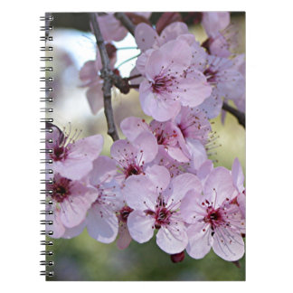 Cherry blossoms pale pink & white notebook