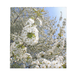 Cherry Blossoms, Spring Notepads