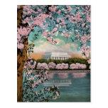Cherry Blossoms Vintage Postcard