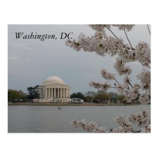 Cherry Blossoms: Washington, D.C. Postcard