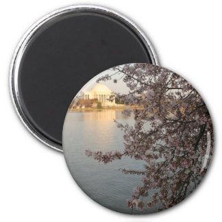 Cherry Blossoms Washington DC Magnets