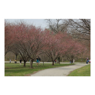 Cherry Blossoms with People Poster