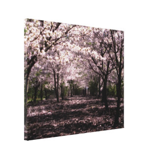 cherry blossoms wrapped canvas print
