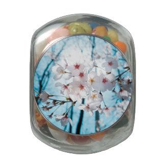 Cherry Sakura Blossom