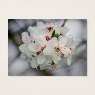 Cherry Sakura Blossom Business Card