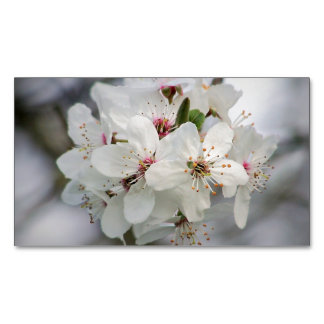 Cherry Sakura Blossom Business Card Magnet